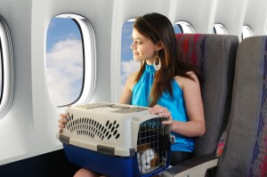 Taking Your Pets to Vietnam